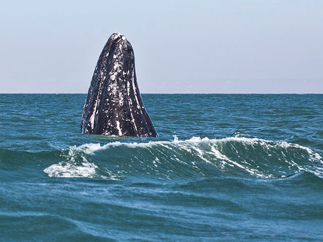 Charter a Whale Watching Trip